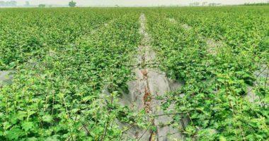 Tạp chí: Nghiên cứu trồng cây cà gai leo ở Thanh Hoá!